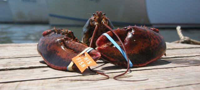 How To Cook A Live Lobster