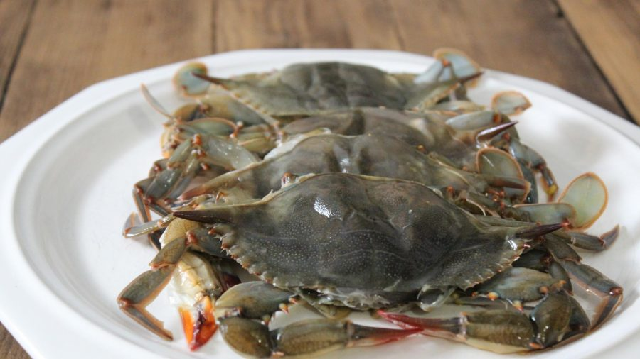 First of the season – Soft Shell Crabs at Cooper's
