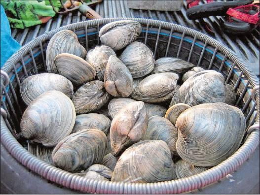 Clams From A to Z: 26 Interesting Things You Didn't Know